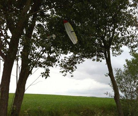 X-Ray Micro im Baum. Herbst 2010